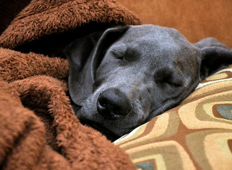 Brrr... It's Cold! 5 Ways to Stay Warm when Temperatures Dip