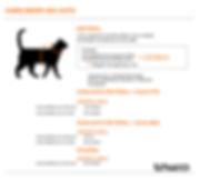 ilustracao_medida gato.png
