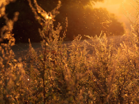 3 Ways to Outsmart Fall Allergies