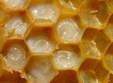 นมผึ้ง.jpg