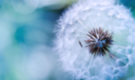 blowing-dandelion-tumblr-wallpaper-3_edi