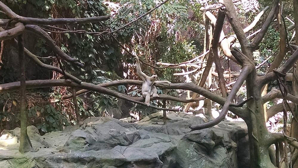 Not a monkey.