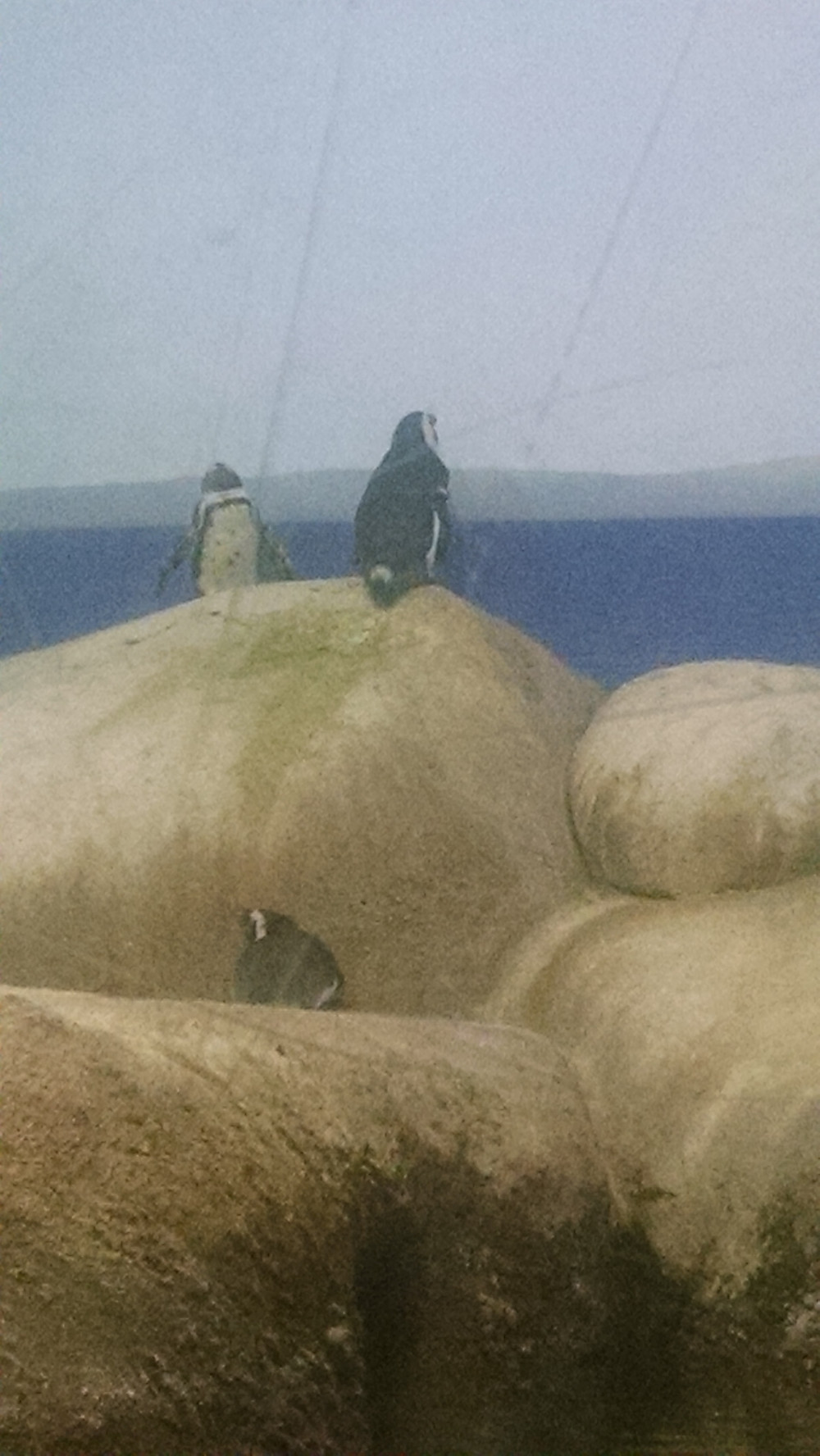 Hang in there, penguin.