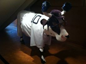 Cooperstown Yankee Cow.  Picture by D.Talbot