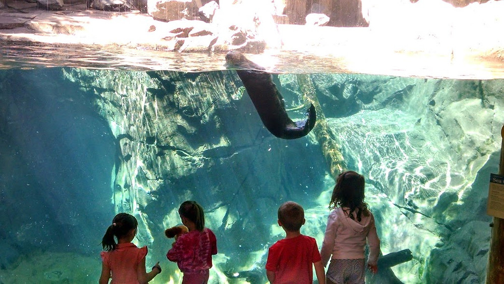 Children watching a floating otter.