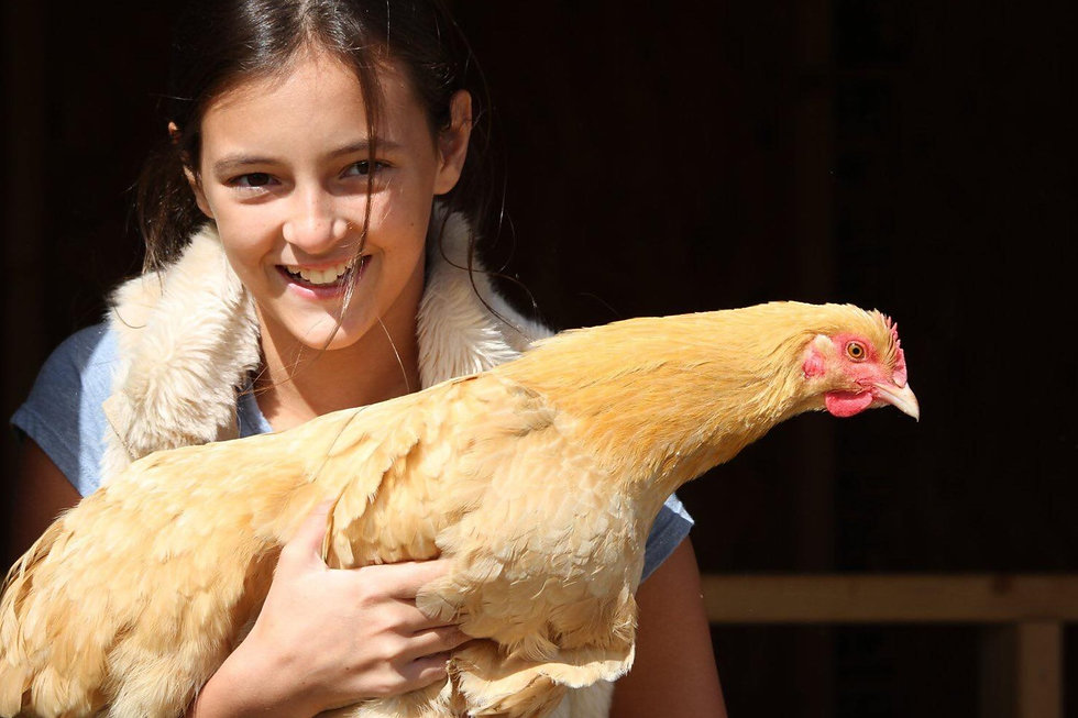 Chicken1_edited.jpg