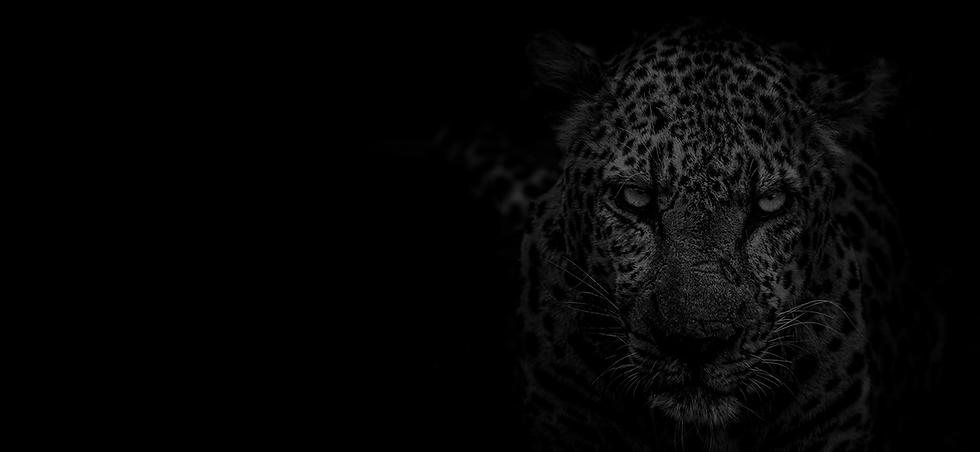 Jaguar Homepage.png