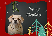 Harry's Christmas Card.png