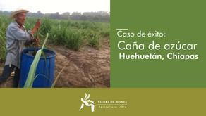 Caso de éxito: Caña en Huehuetán Chiapas
