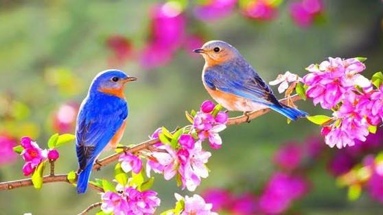Welcome Spring, Bienvenida la Primavera