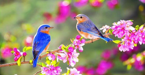 Primavera, Spring