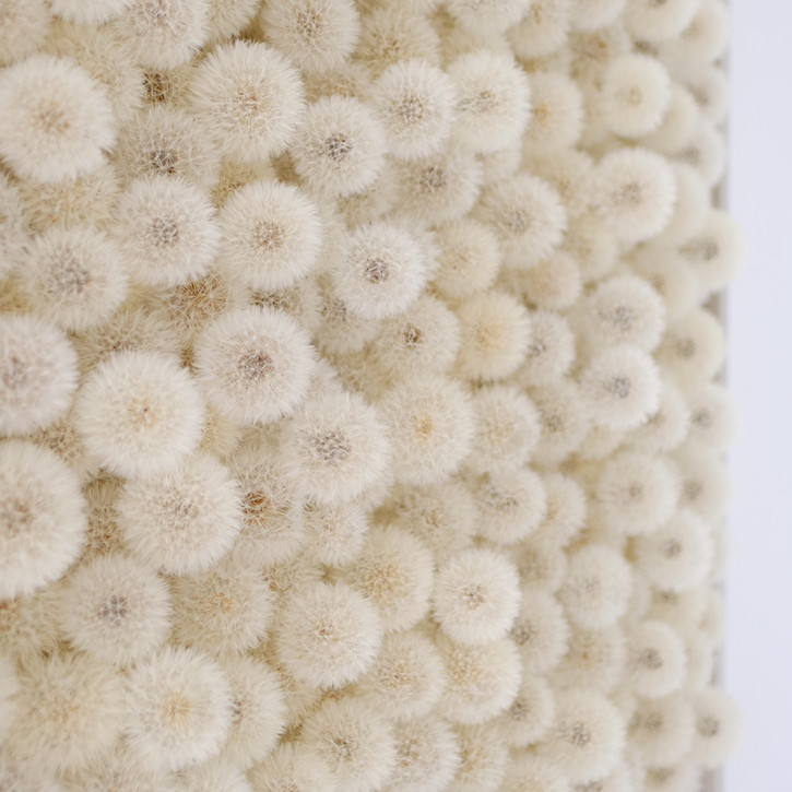 Hilde Trip Wish Full 2020 Pusteblumen, Plexiglas 100 x 100 cm Detail
