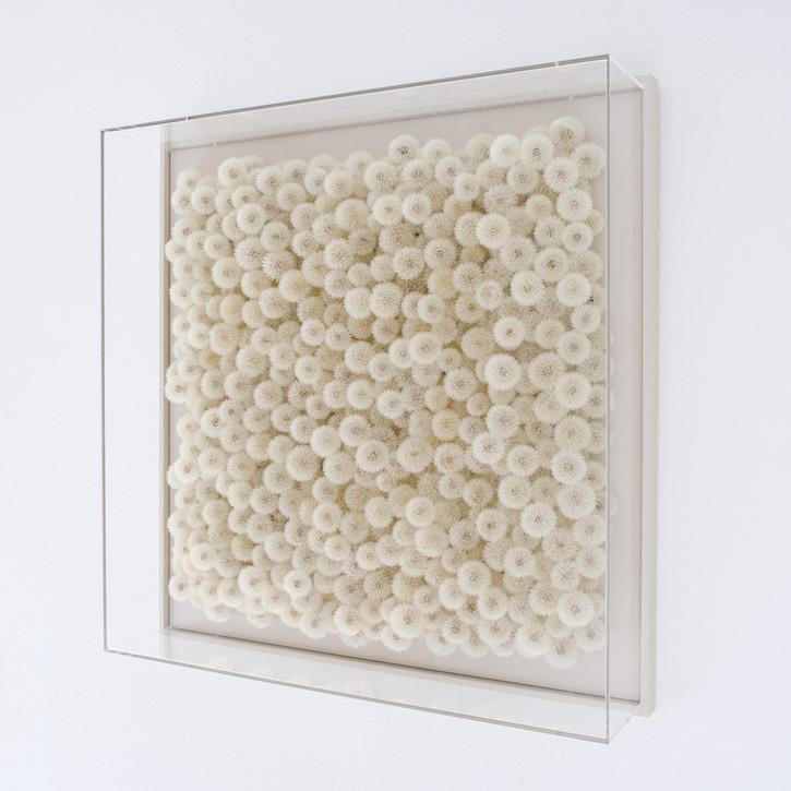Hilde Trip Wish Full 2020 Pusteblumen, Plexiglas 100 x 100 cm