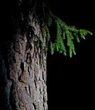 Photos: Trees