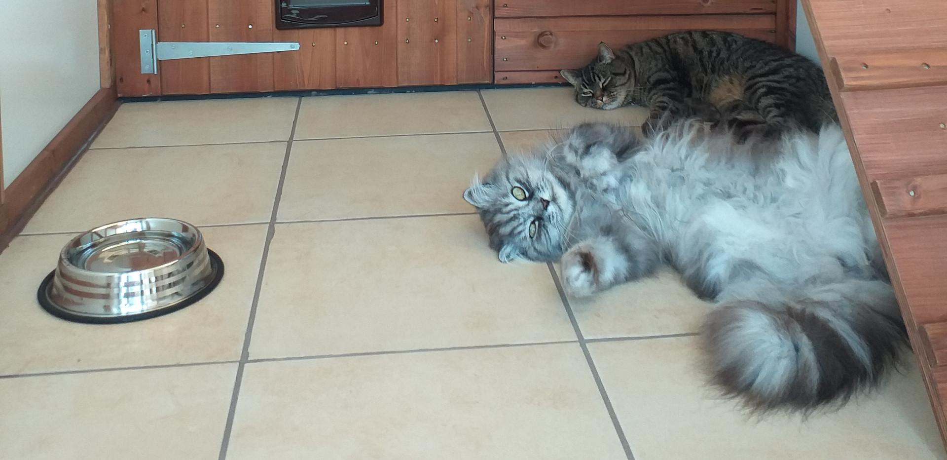 Bonnie and Bella