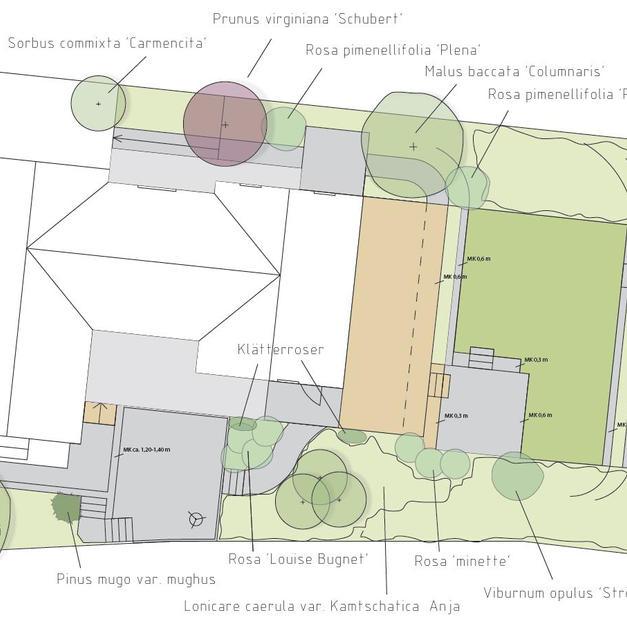 Illustrationsplan med träd