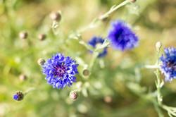 Blüten im Wienberg
