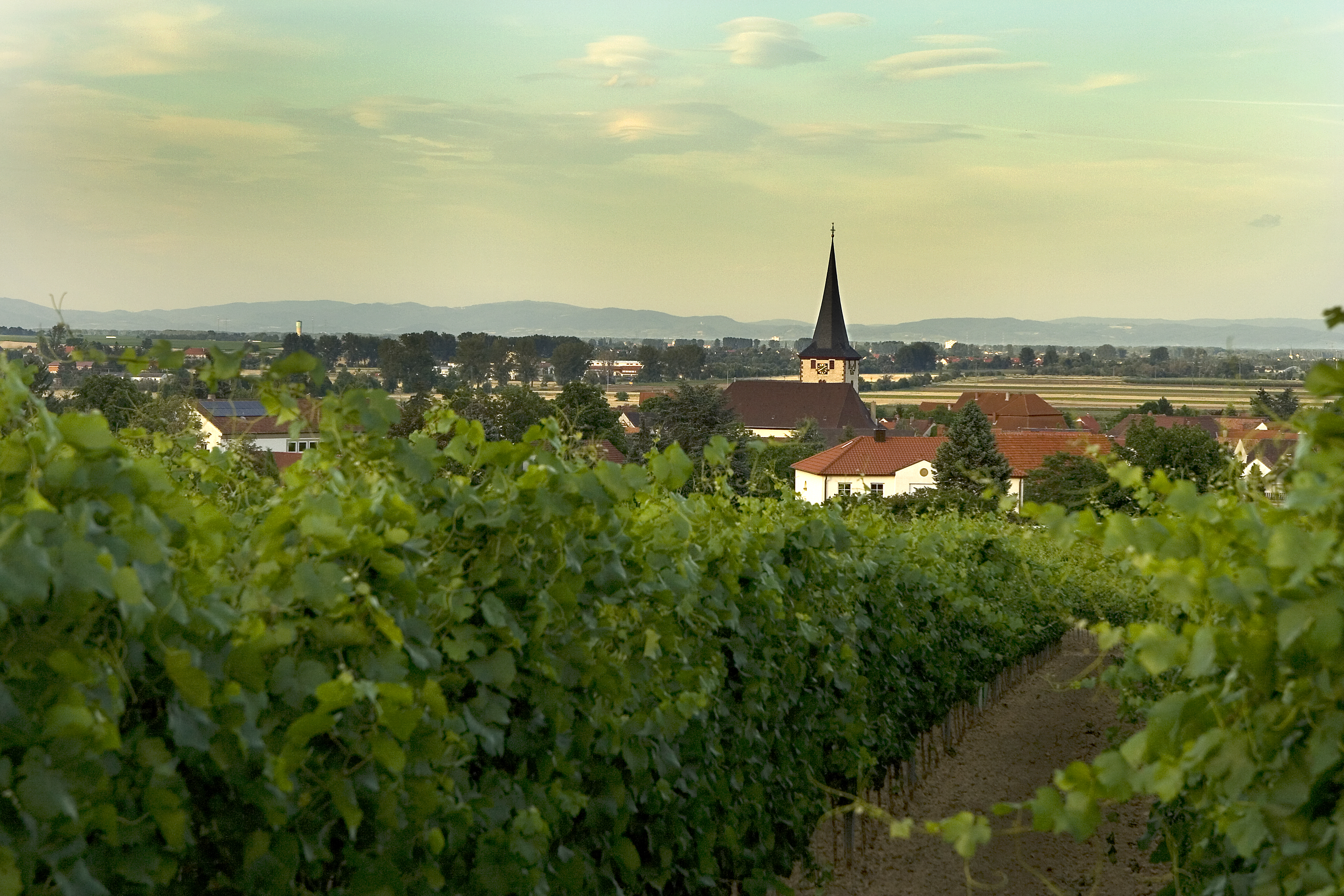 Laumersheim, Pfalz