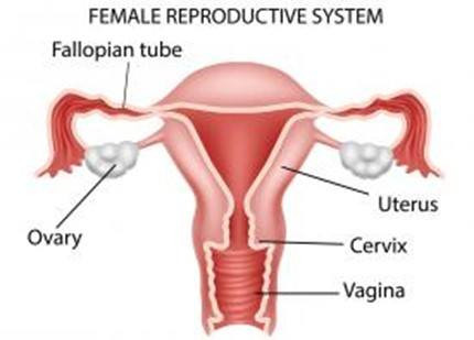 Cervical Cancer: causes and symptoms