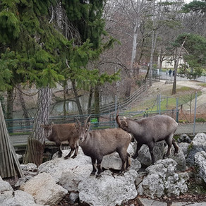 Parc aux animaux du Bois-de-la-Bâtie
