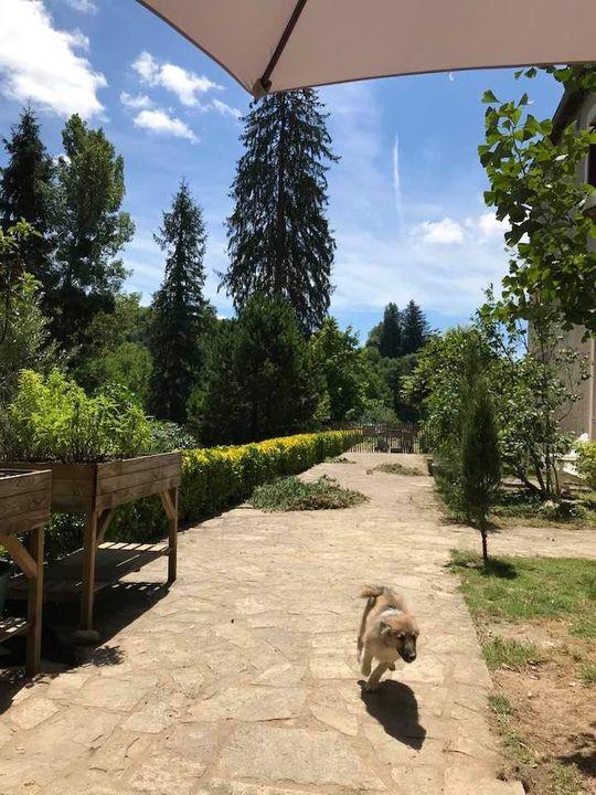 puppyrace op het Borr-des
