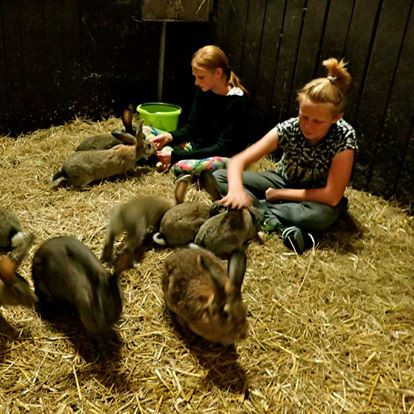 konijnenknuffelgroep
