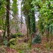 wintergroen in ons bos