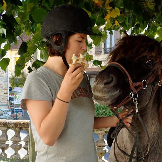 IJslandse paarden La Faye