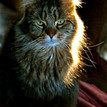 Bijzondere katten