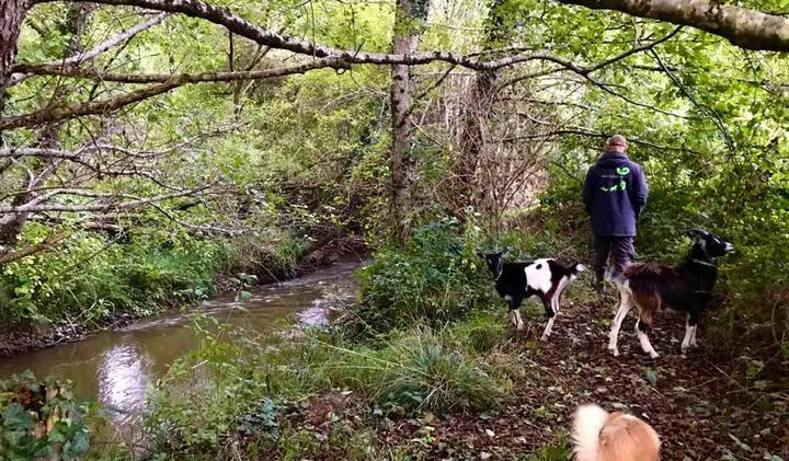 een nieuw wandelpad langs de rivier