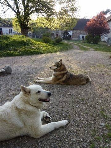 Honden op La Faye