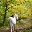 wandelen met het goede gezelschap van paarden