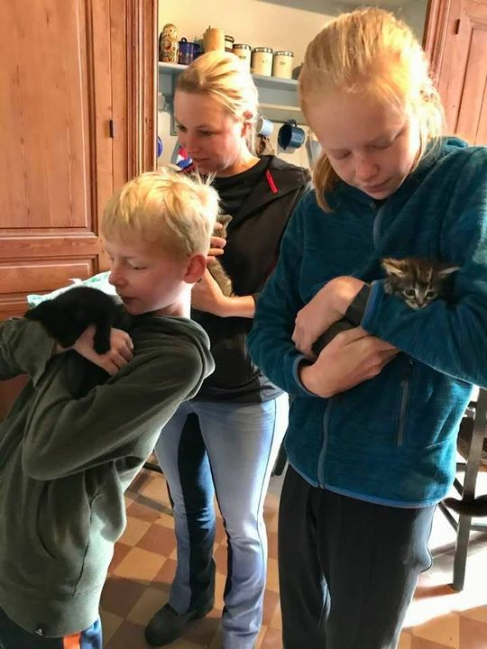 kittenknuffelronde in de kattenkeuken
