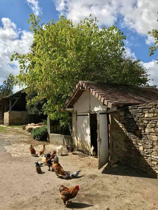 Het nieuwe kippenhuis
