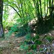 mooie natuurlijke Europese bossen met grote variatie