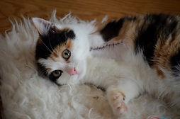 animal-welfare-2372093.jpg