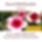 Cover Freundschaft MP3 Download.png