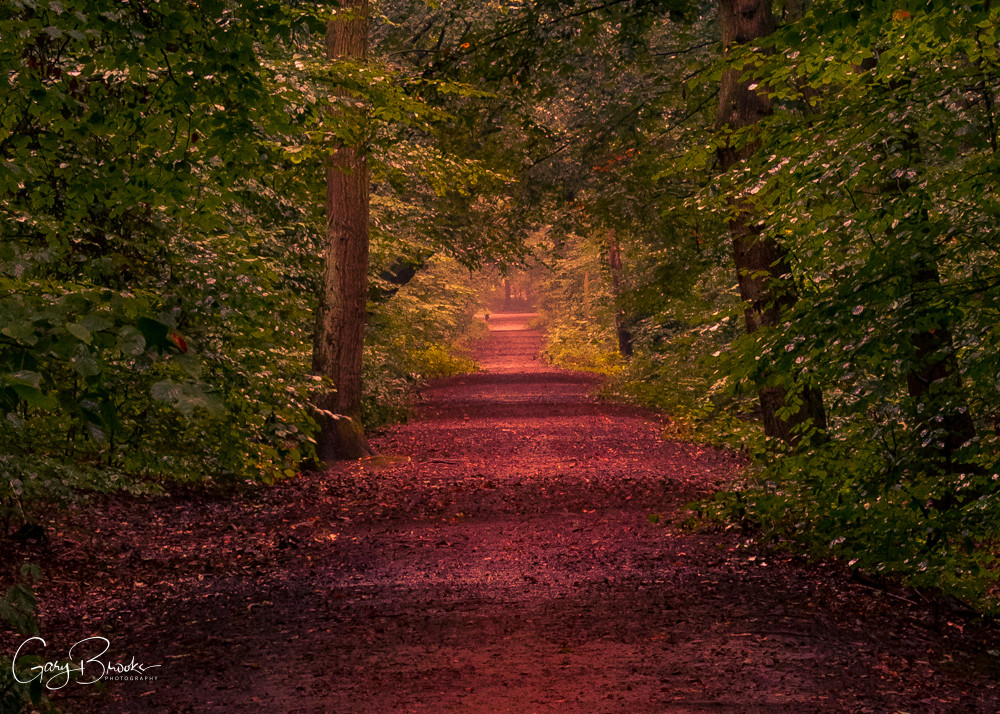 sandall Beat Woods in Autumn