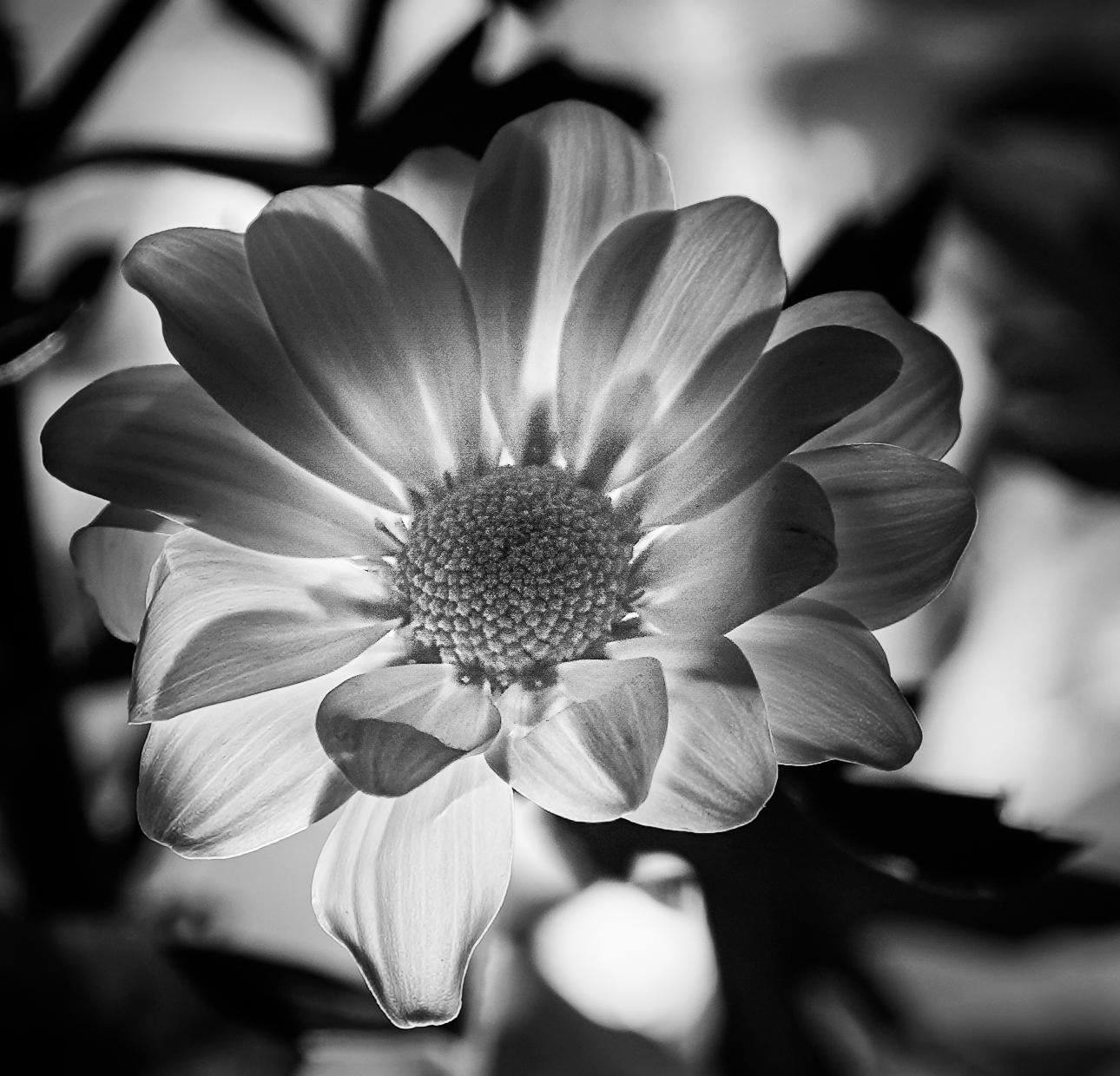 Monochrome flower world