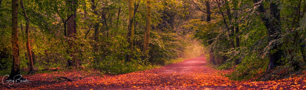 Panorama Long Exposure shot of Sandall Beat Woods in Autumn