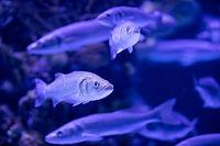 School of Fish Underwater-Photo by Engin Akyurt.jp