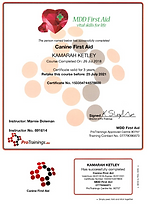 FIRST AID CERTIFICATE.png