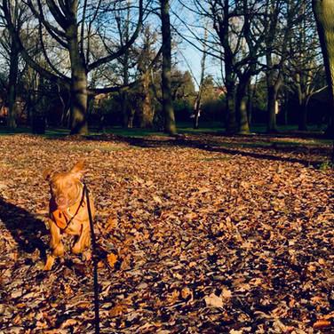 Greta - One to One Walk