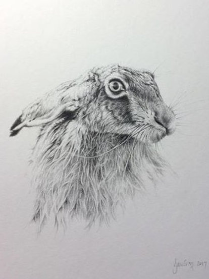 Hare drawing 2 - SOLD
