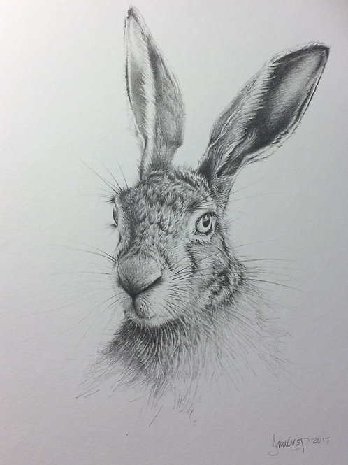 Hare 4 - SOLD