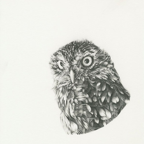 Little Brown Owl (graphite) - SOLD