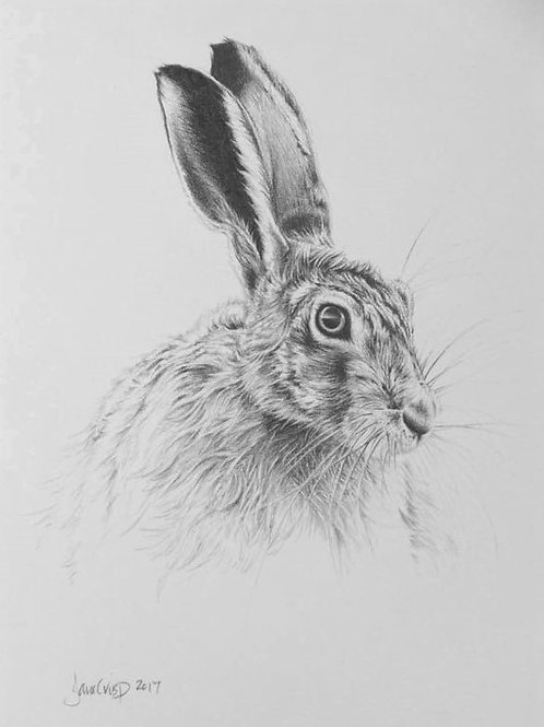 Hare drawing 3 - SOLD