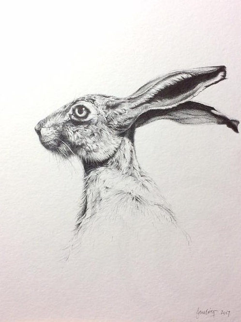 Hare drawing 1 - SOLD
