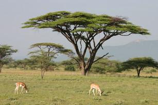 Kenya Gallery 5.jpg