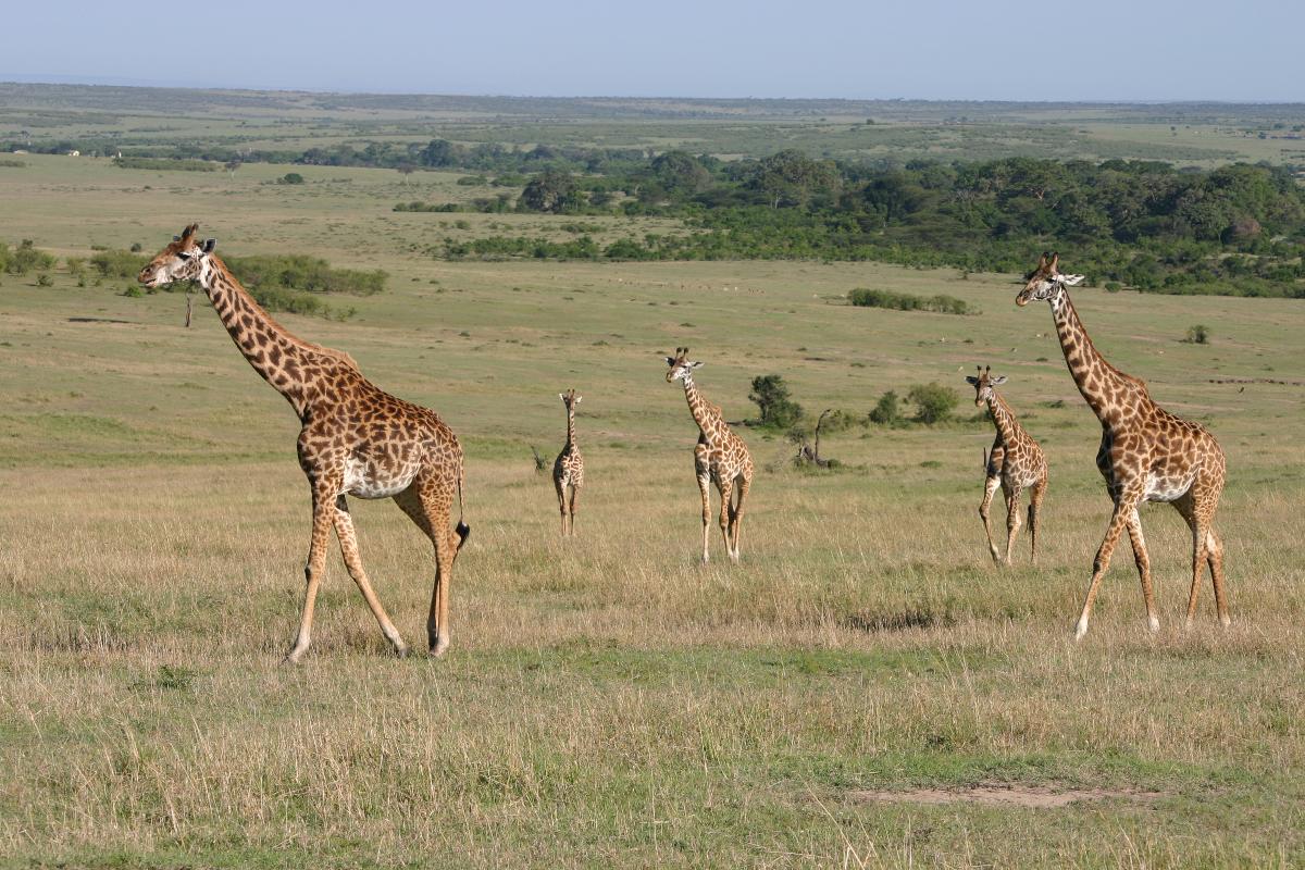 Kenya 1500x800 43